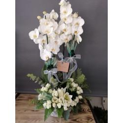 Orkide Aranjman Mehtap